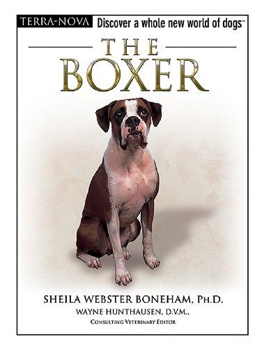 The Boxer (Terra-Nova)