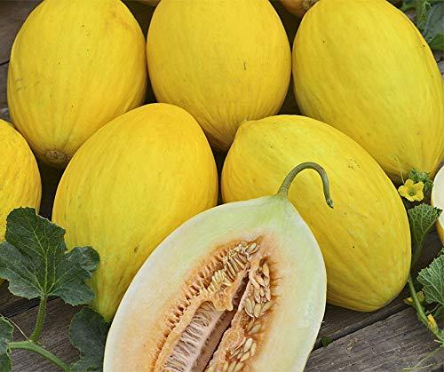 Bobby-Seeds Melonensamen Gelbe Kanarische Portion