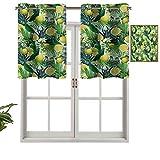 Hiiiman Cenefa corta recta, diseño de plantas tropicales con hojas de hoja perenne grande, limón, botánica, palma, selva, juego de 1, 127 x 45 cm para Windows cocina