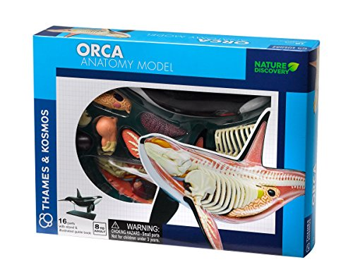 Thames & Kosmos Thames and Kosmos 260990 Orca Anatomy, 16 parts with stand & illustrated guidebook, Nature Discovery,ages 8+, Multi