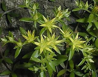Best sedum sarmentosum plant Reviews