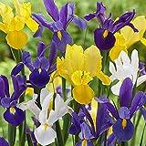 Bulbi da Fiore (10 X Iris hollandica MIX)