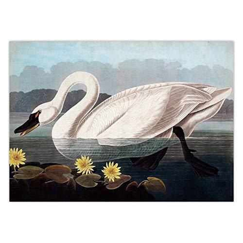 Puzzle 1000 piezas Audubon Vintage Bird Art Picture American Heron Swan Rose Spoonbill puzzle 1000 piezas paisajes Juego de habilidad para toda la familia, colorido juego de ubicac50x75cm(20x30inch)