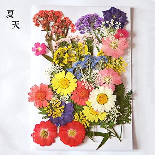 KONGZIR Presionado Flores pequeñas Flores secas y litografías Seca Bricolaje decoración de la Flor preservada Inicio Mini pétalos Mixtos (Color : D.2)