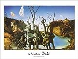 Salvador Dalí Poster/Kunstdruck Reflections of Elephants