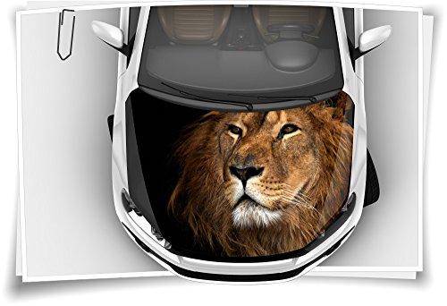 Medianlux Löwe König Afrika Motorhaube Auto-Aufkleber Steinschlag-Schutz-Folie Airbrush Tuning Car-Wrapping Luftkanalfolie Digitaldruck Folierung