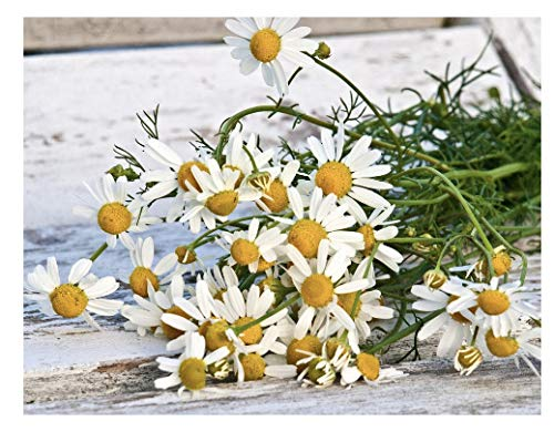 Marde Ross & Company Organic Chamomile Plant Seeds - Popular Herb...