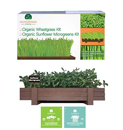 Organic microgreens growing kit with beautiful wooden countertop...