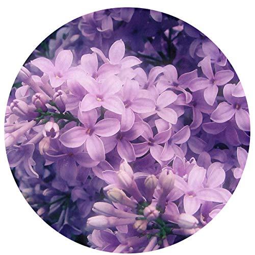 Odelia Palmer Felpudos de Flores de Color Lila, Alfombra Redonda para el Suelo, Entrada, Entrada, Alfombra para Puerta Delantera, alfombras de Oficina, decoración Interior y Exterior