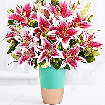 Vistaric 100 unids Bonsai Semillas de lirio Plantas perennes de interior Semilla de flor de lirio Blanco puro Jardín casero Flor Sementes Plantas Envío gratis púrpura