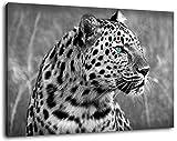 Gepard Schwarz/Weiß Format:120x80 cm Bild auf Leinwand