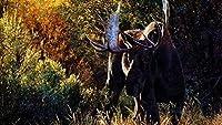 DIYペイントバイナンバーズ油絵キットカラートークキャンバス大人のための家の壁の装飾初心者-鹿の角グラスウォーク40×50cm(フレームレス)