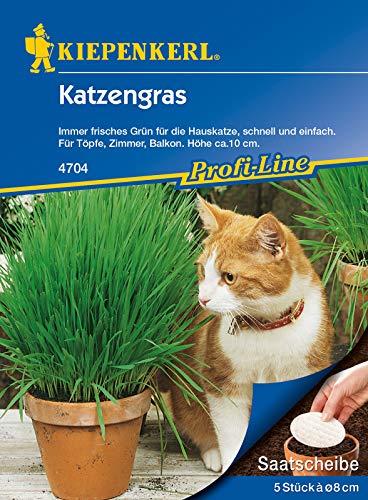 Hierba para gatos, 5 unidades, rodajas de semillas, verde siempre fresco para el gato doméstico, rápido y fácil para macetas, habitaciones y balcón
