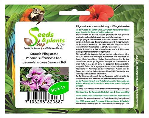 Stk - 5x Pfingstrose Paeonia suffruticosa Kao Baumpfingstrose Samen #369 - Seeds Plants Shop Samenbank Pfullingen Patrik Ipsa