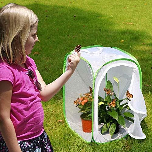 JinYiny Schmetterlinge Lebensraum Insektenkäfig zusammenklappbarer Käferfänger Netz Insektenkäfig Terrarium Pop-up 35,4 cm groß für Aufbewahrungskäfig mit großer Reißverschlussöffnung