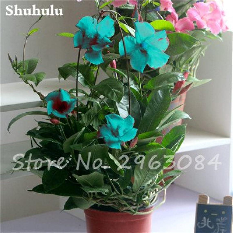 50 Pcs/Bag Rare Dipladenia Sanderi Seeds Perennial Climbing Mandevilla Sanderi Flower Outdoor Ornamental Bonsai Garden Plant 18