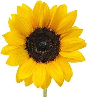 HOT sale! 100pcs Mini Sunflower Seeds Dwarf series height 40cm Flower Seeds