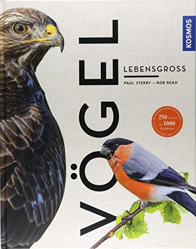 Vögel lebensgroß (Großformat)