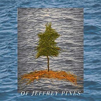 Of Jeffrey Pines