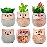 ME9UE 6 PCS 2.5 Inches Mini Small Ceramic Owl Planters, Succulent Cactus Plant Flower Pot, Cute Owls Bonsai Pots Container Holder with A Bottom Drainage Hole (Plants Not Included)