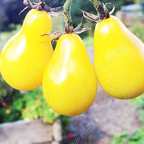 100 Graines de légumes de haute qualité des semences de tomate Arbre Semences de tomates de serre de tomates arbustives Escalade Balcon Jaune Potted