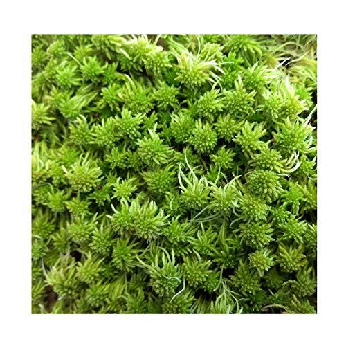 Tin Roof Treasure Super Sphagnum Moss 8'x10' Bag for Terrariums Orchids Reptiles Carnivorous Plants