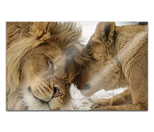 Acrylglasbilder 80x50cm Löwe Löwin Tiere Paar Liebe Hochzeit Acryl Bilder Acrylbild Acrylglas Wand Bild 14H1838