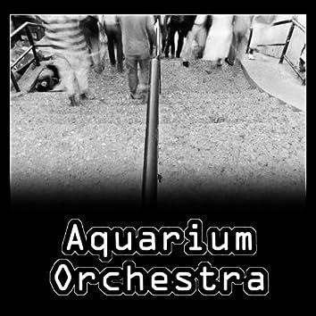Aquarium orchestra