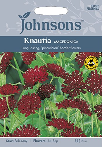 BB 英国ジョンソンシード Bees & Butterflies Knautia macedonica ビーズ&バタフライズ・ナーティア・マケドニカ