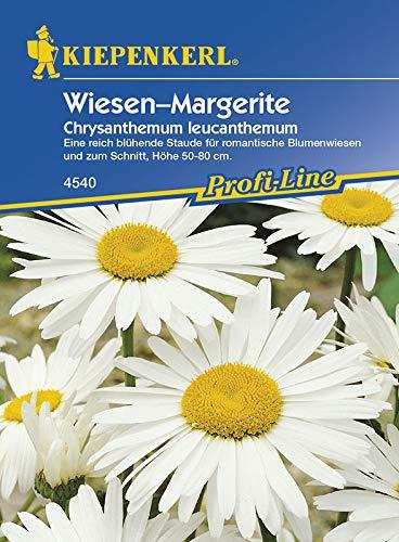 Margeriten 'Wiesen-Margerite'