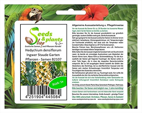 Stk - 5x Hedychium densiflorum Ingwer Staude Garten Pflanzen - Samen B2107 - Seeds Plants Shop Samenbank Pfullingen Patrik Ipsa
