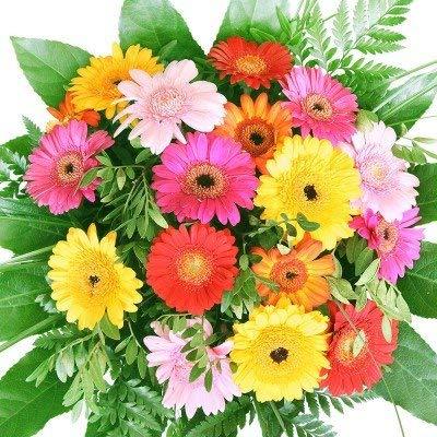 Bunter Blumenstrauß mit Gerbera - Blumen-Geschenktipp zum Geburtstag