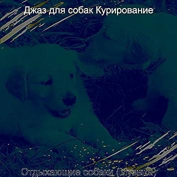 Отдыхающие собаки (Музыка)