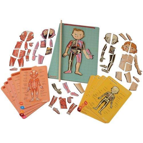 Janod- Imán Juego Educativo del Cuerpo Humano-Anatomía, Organos, Esqueleto, Músculos 76 Piezas Magnéticas-A Partir de 7 años-12 Lenguas, Multicolor (J05491)