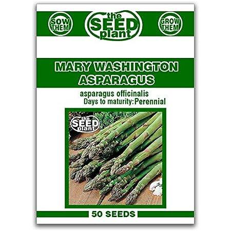 Jersey supr/ême asperges graines 30 sans OGM Mary Washington Asperges officinalis graines de l/égumes pour la plantation de jardins de jardin