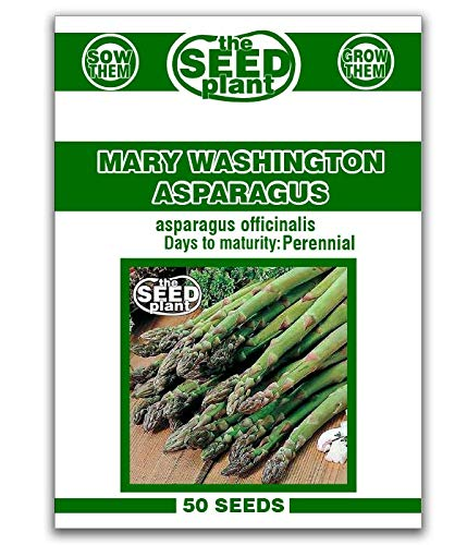 Mary Washington Asparagus Seeds - 50 Seeds Non-GMO