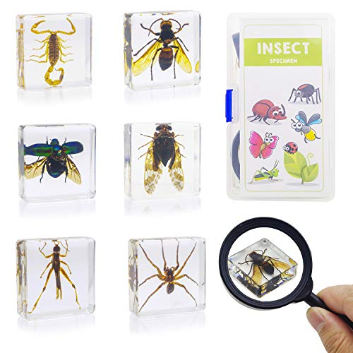 ELifeBox 6 PCS Insect Specimen Set,Cicada,Wasp,Spider,Scorpion,Locust,Chafer Resin Collection Science Toys