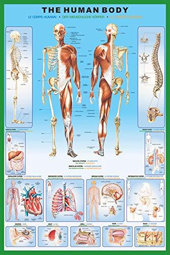 """Pyramid International - Maxi poster """"Il corpo umano"""", multicolore, 61 x 91,5 x 1,3 cm"""