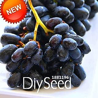 Big Promotion!100 PCS/Lot Seedless Black Grape Seeds Advanced Fruit Seed Natural Growth Kyoho Gardening Fruit Plants,#65JSGL