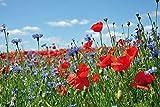 1art1 Blumen - Wildblumen-Wiese Mit Mohn- Und Kornblumen