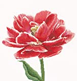 Thea Gouverneur - Counted Cross Stitch Kit - Embroidery Kit - 520A - Pre-Sorted DMC Threads - Red/White Edged Early Double Tulip - Aida - 13.4 x 14.2inch - DIY Kit