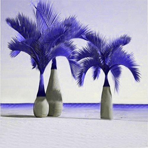 Inovey 20 Pcs Exotiques Bouteille De Palmiers Bonsaï Tropical Ornemental Arbre Plantes Graines Plantation De Jardin - Violet