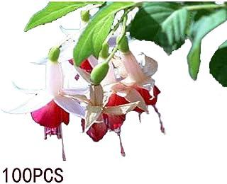 GoodKE 100Pcs Begonia Flower Seeds Bonsai Plant DIY Garden Flowers