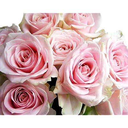 バラ 生花 切り花 薔薇 ピンク スイートアバランチェなど 5本