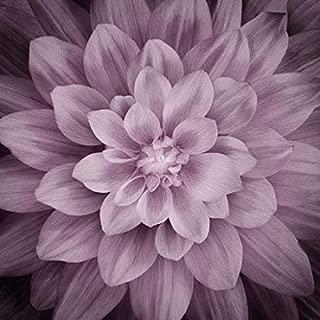 Dream Big - Digital Panel #P4389-46 Plum Large Floral -Plum- by Hoffman Fabrics