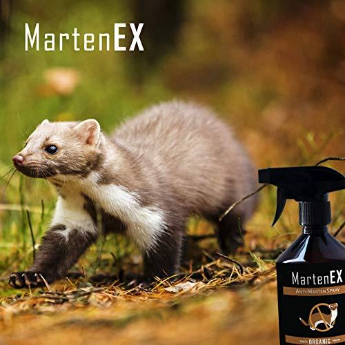 Répulsif naturel anti-fouine MartenEx I Spray répulsif contre rongeurs, martres, renards et belettes I Pour maison, grenier & voiture I 250 ml