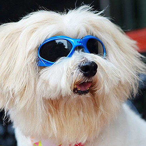 LOOYUAN Pet Dog Sunglasses - Protective Eyewear Goggles Small Waterproof Protection (Blue)