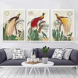 Pastoral Zoo Park Birds On Tree Animal Canvas Painting Estilo americano Decoración para el hogar Imagen de pared para fondo de dormitorio / 40x60cmx3 Sin marco