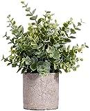MIAIU Small Potted Plants