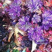 Vista 100 Pcs/Lot Heuchera Graines Corail Fleur Graines Coral Bells Coloré Feuille Bonsaï Plant DIY Maison Jardin Montre Flores